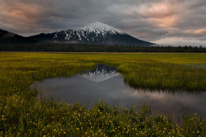 Mt Bachelor Meadow
