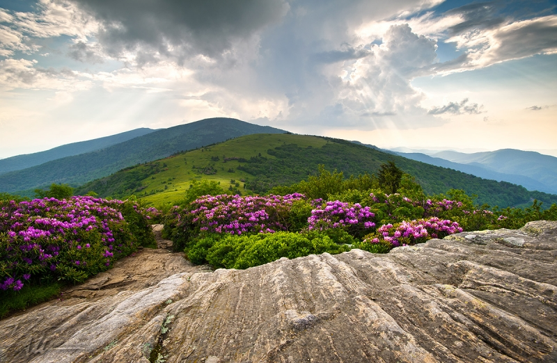 Jane Bald In Bloom – Roan Highlands Landscape