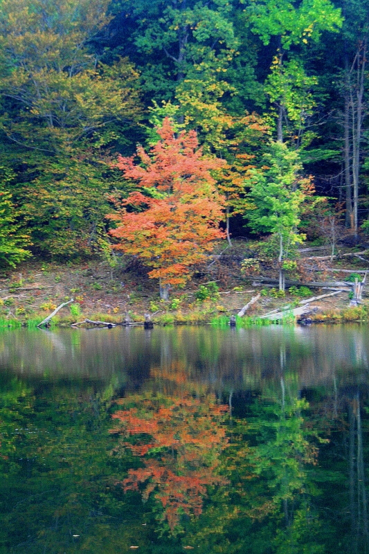 Autumn Reflections At Black Hills