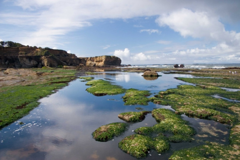 Otter Rock Tide Pools