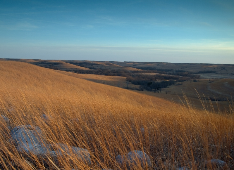 Tallgrass Prairie In Winter