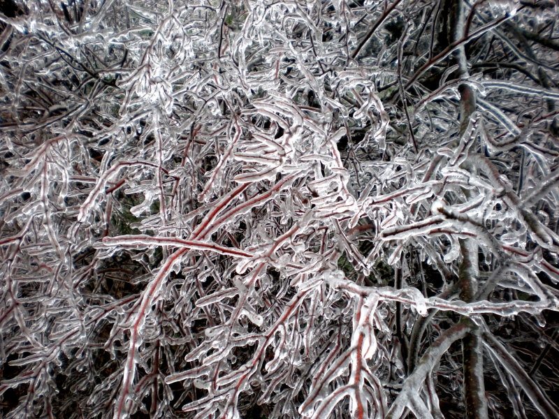 After The Icestorm