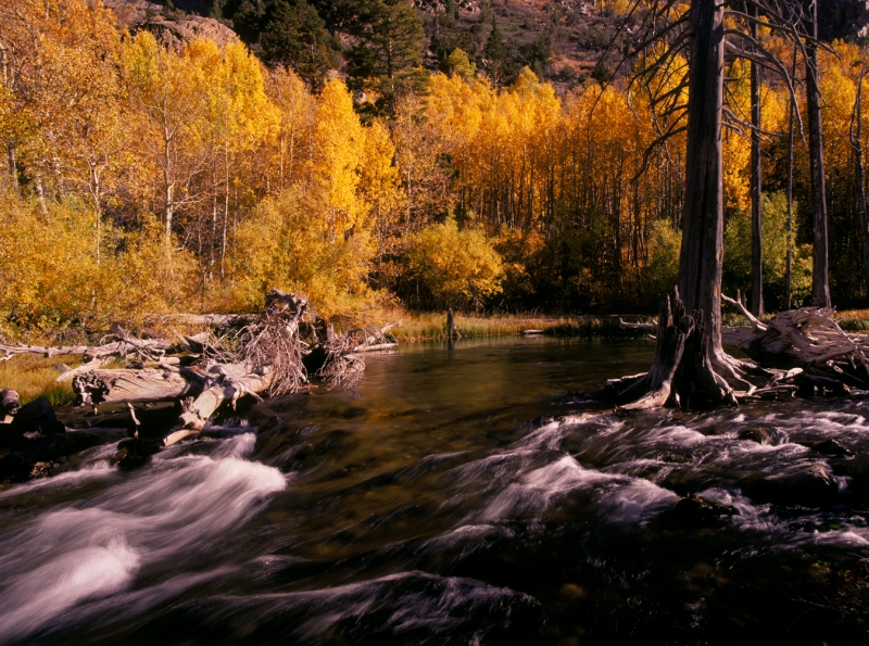 June Creek In Autumn