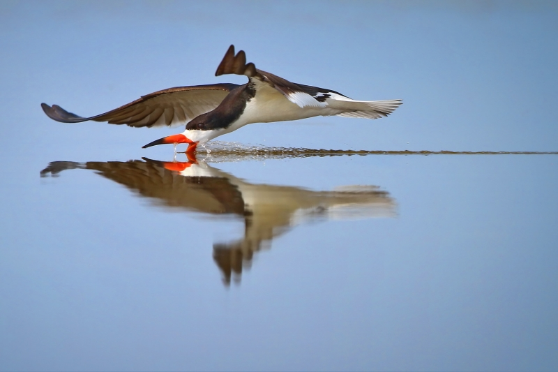 Skimmer Reflections