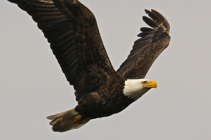 Eagle On A Mission