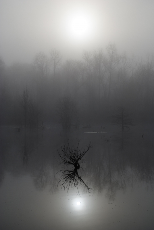 Foggy Pond