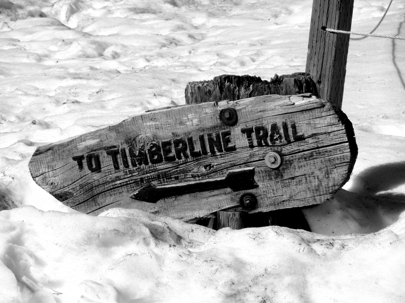 Timberline Trail