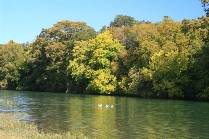 Fall Colors On The Guadalupe River, Kerrville Tx.