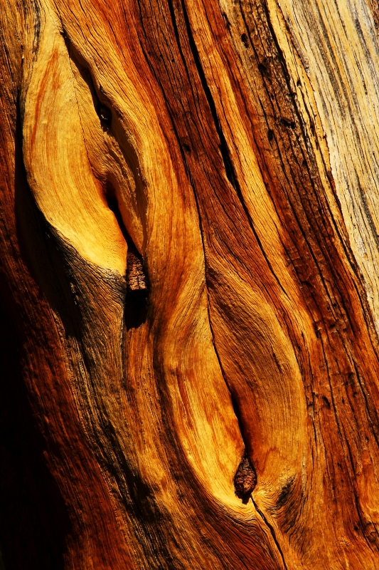 Yosemite Abstract