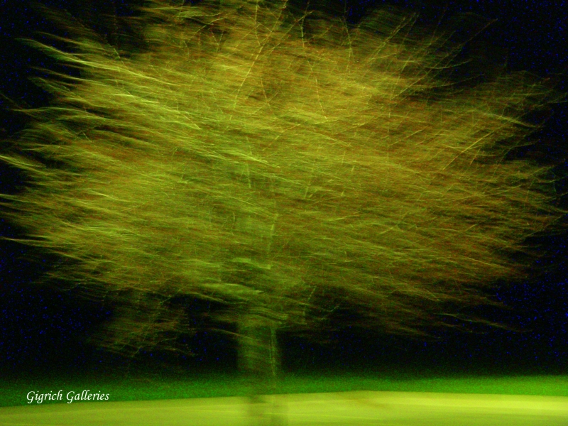 Tree At Night By Gigrich Galleries