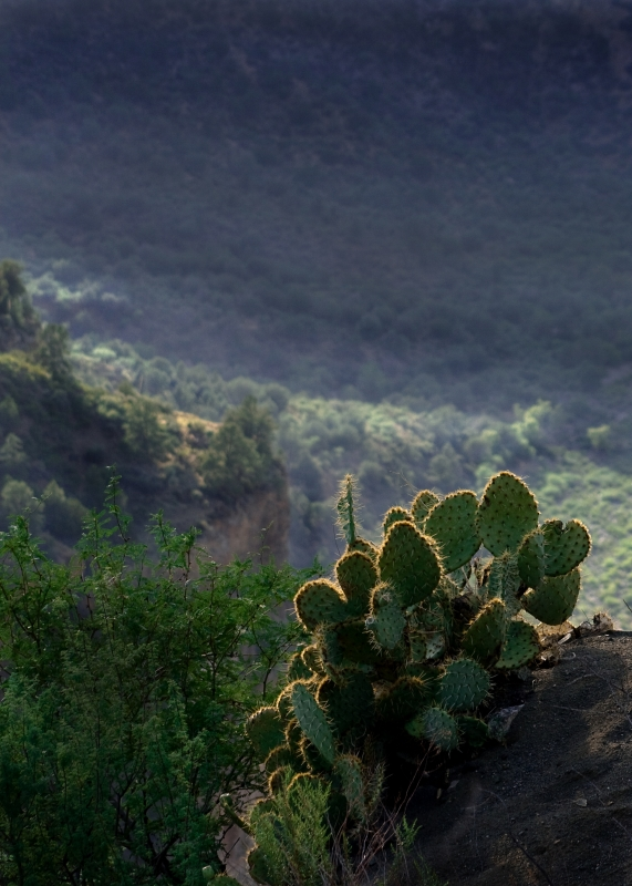Cactus On Hill