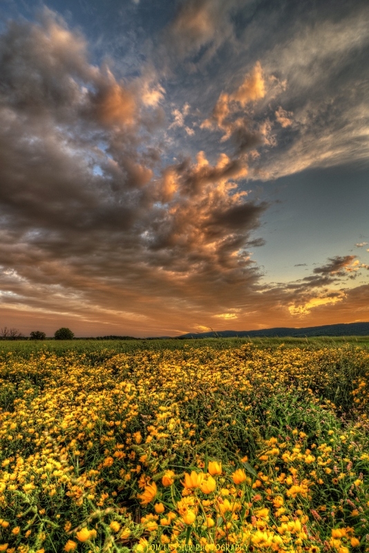 Valley Wildflower Sunset