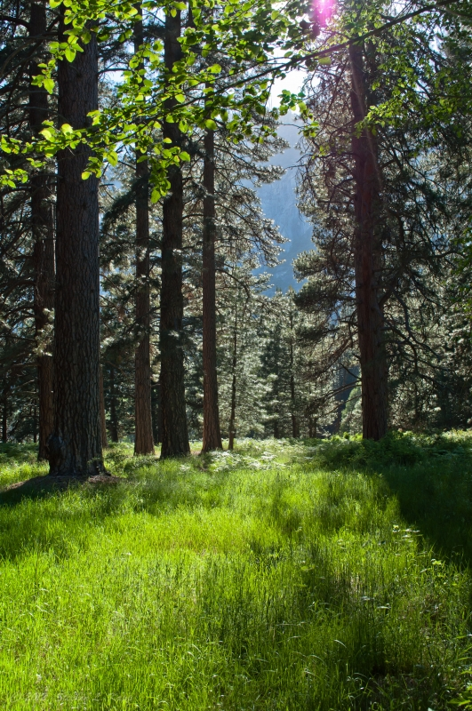 Yosemite Valley Meadow Light