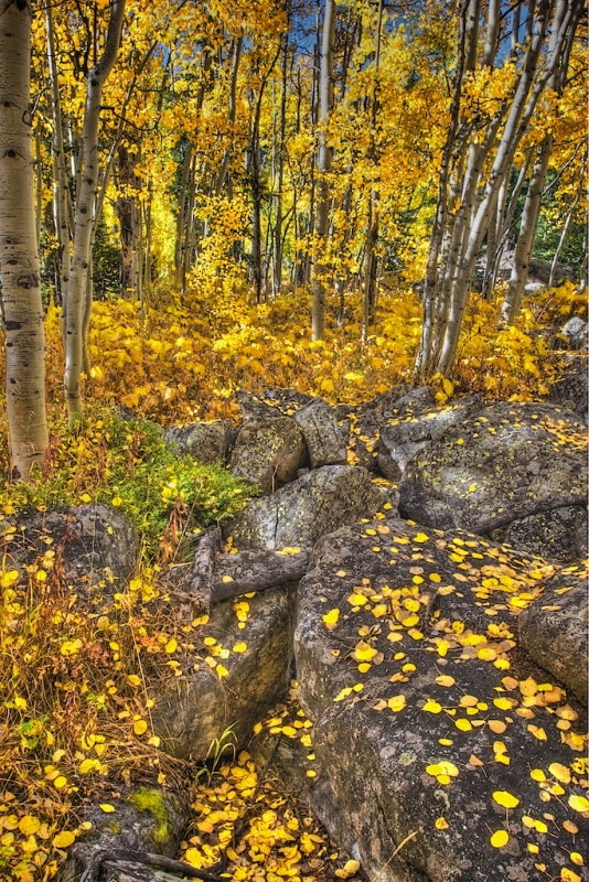 Boulders And Aspens