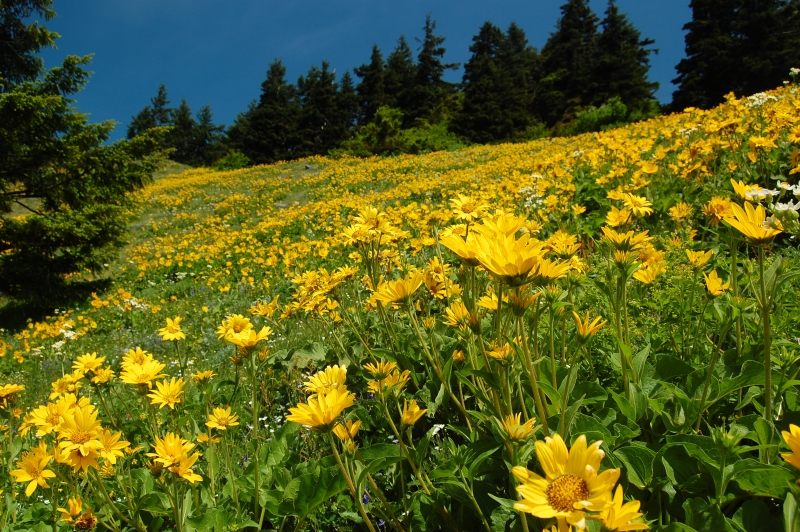 The Hills Are Alive With Wildflowers