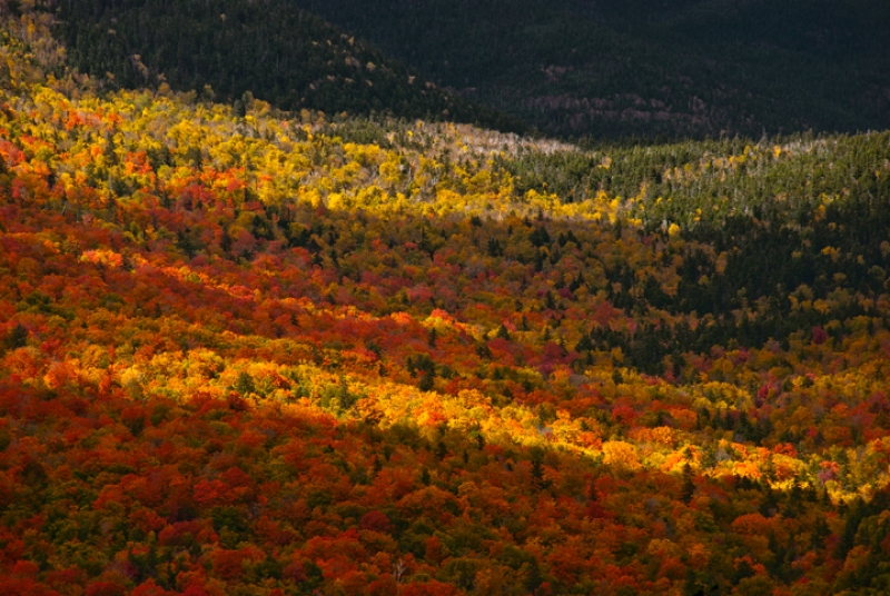 White Mountains, Autumn Chiaroscuro