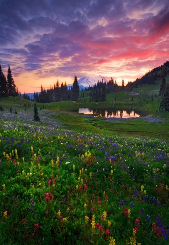 Naches Tarn At Dusk, Chinook Pass Area