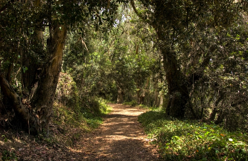 Stereotypical Forest Path