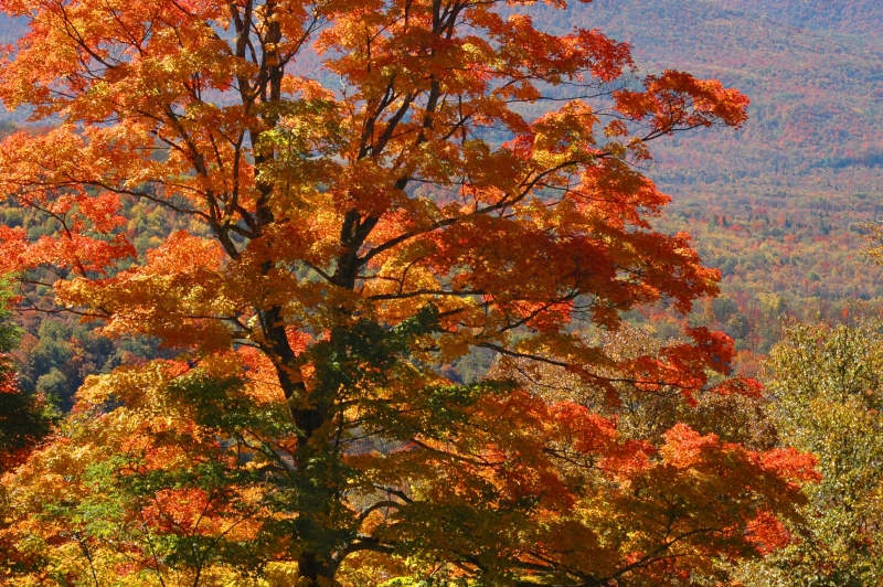 Highland Scenic Highway Fall Color