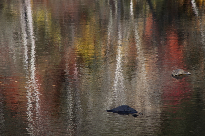 Autumn Reflections #1