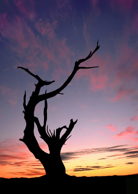 Dead Tree At Sunset, Arches Np