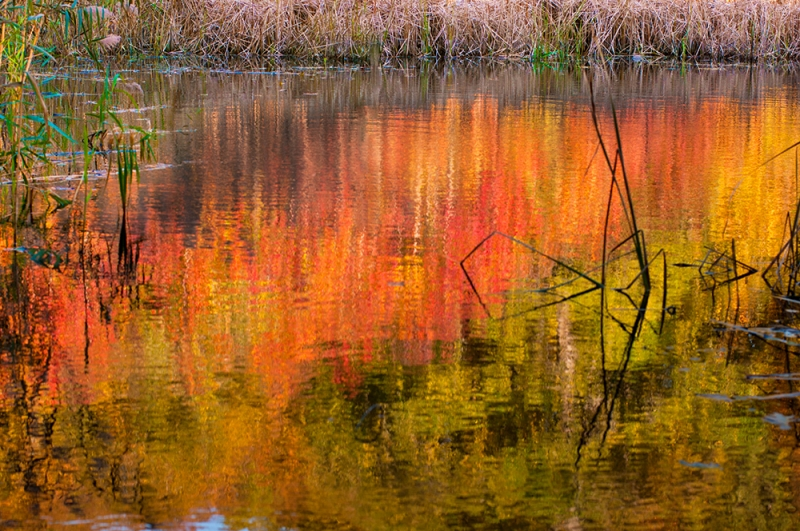 Fall @ The Swamp
