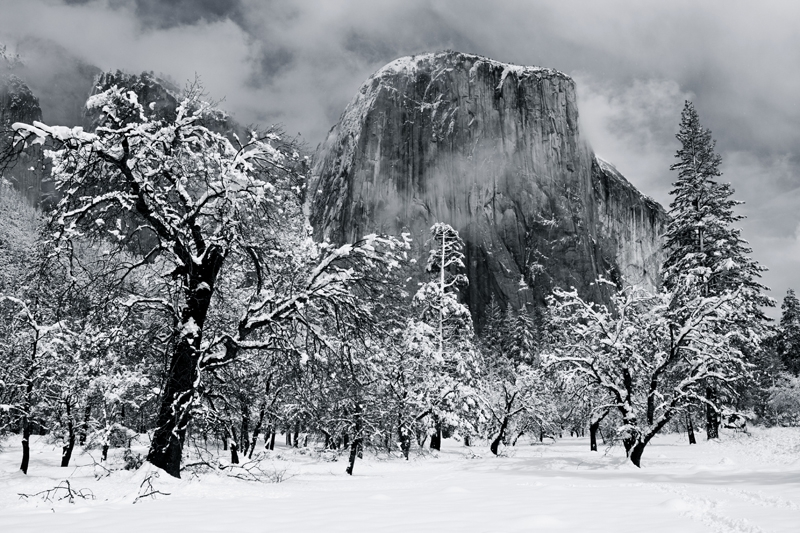 Black Oaks And El Capitan