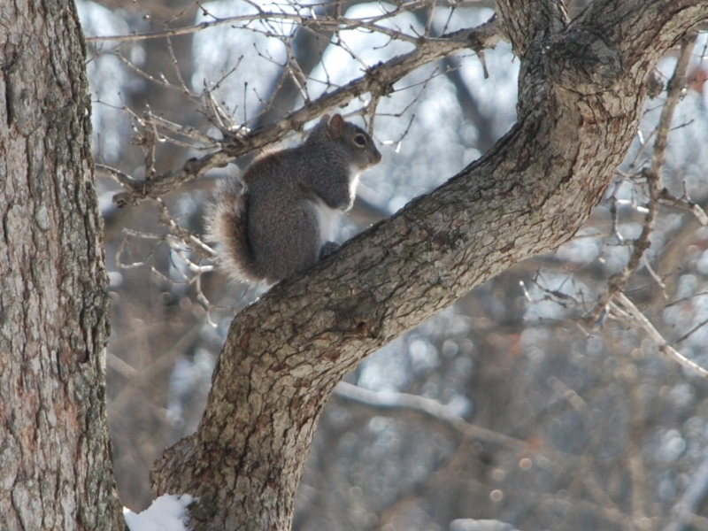 Frozen Squirrel