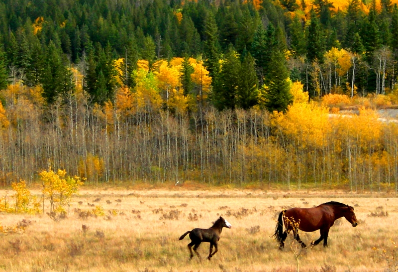 Grazing Horses – Mother And Baby