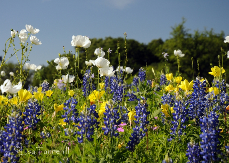 Spring In Texas Hill Country