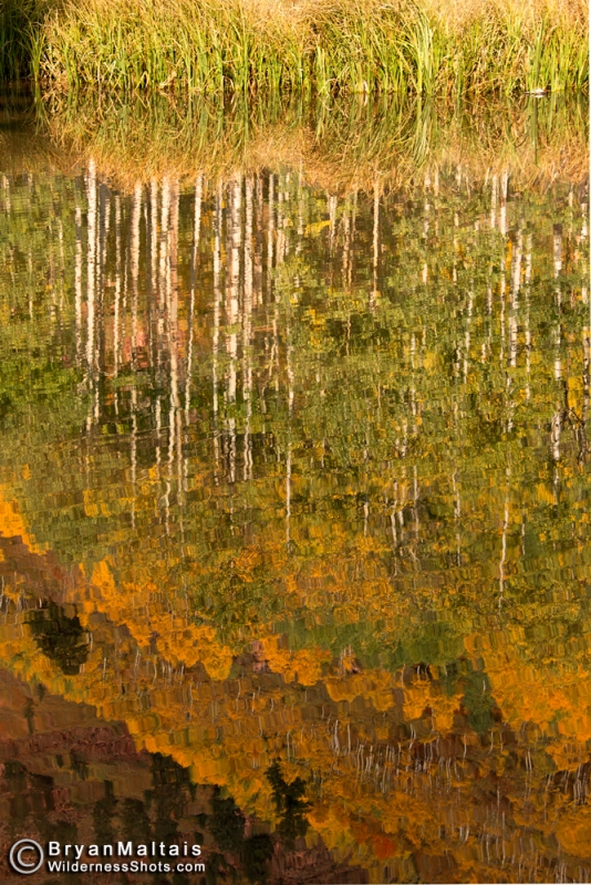 Aspen Reflection