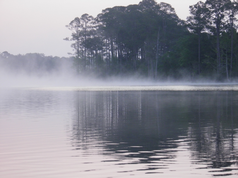 Misty Sunsrise On The Bayou