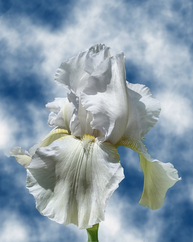 Iris In The Clouds