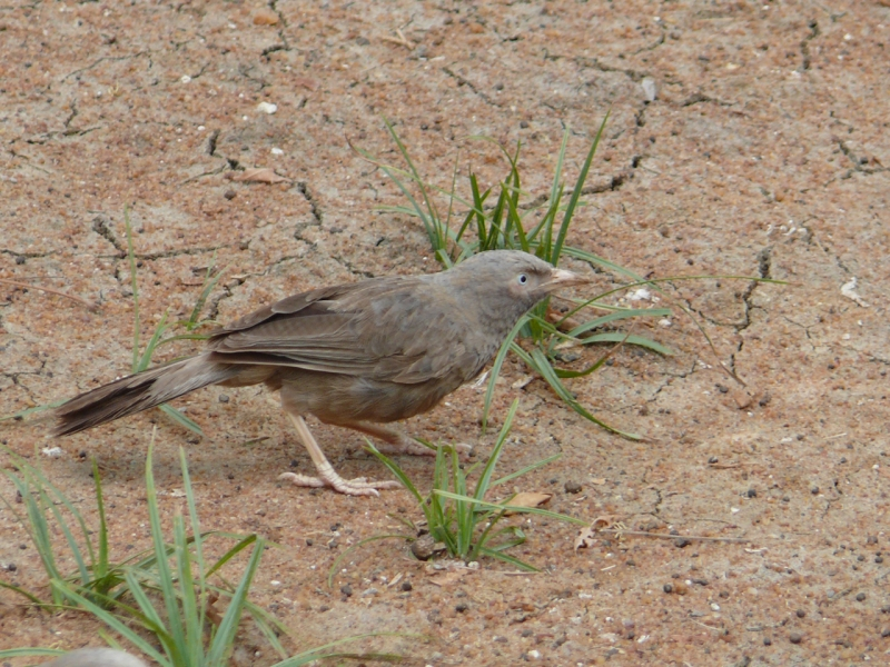 A Common Bird
