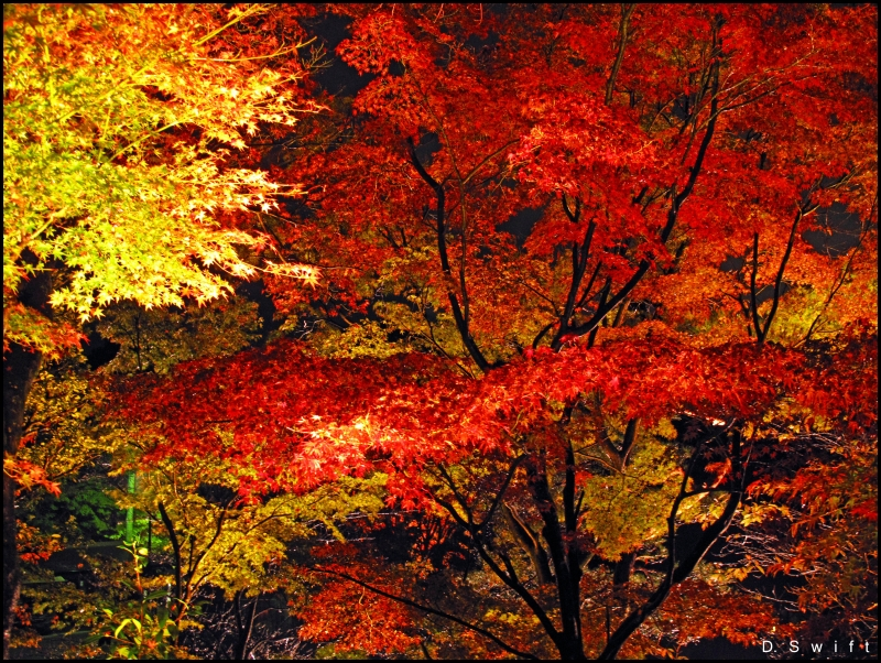 Autumn Colorburst
