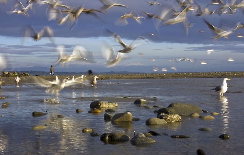 Gulls On A Winter Beach