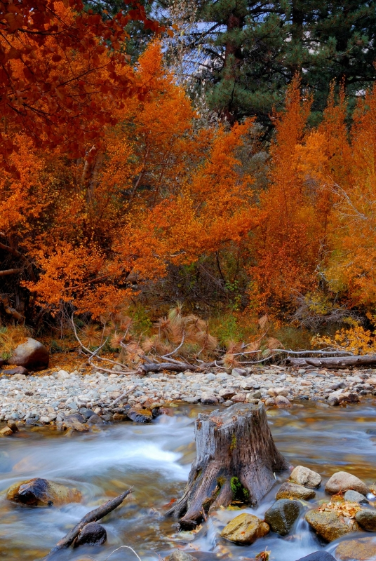 Bishop Creek In The Fall