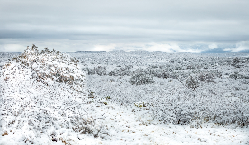 Sonoran White Out