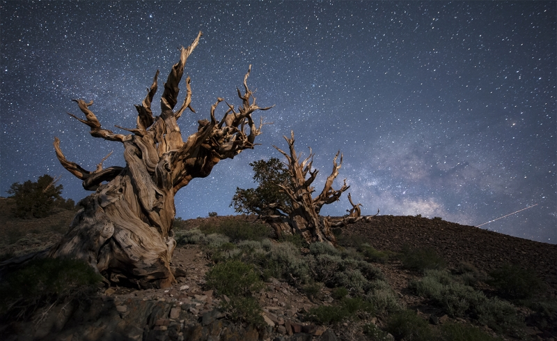 Milkyway Rising At Bristlecone.