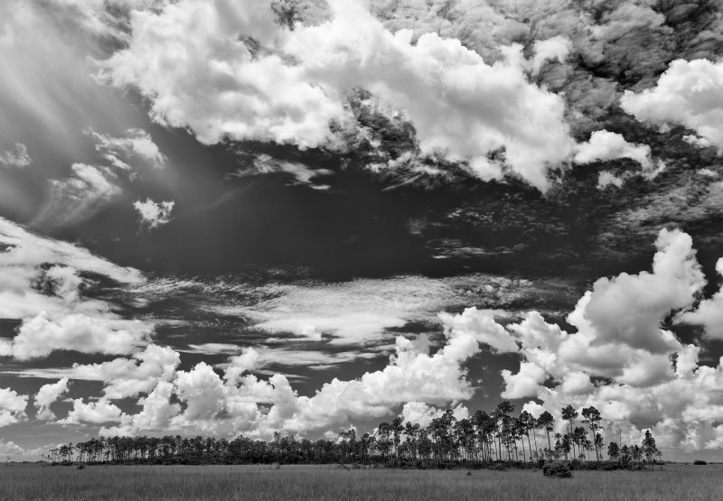 Everglades National Park Summer Clouds
