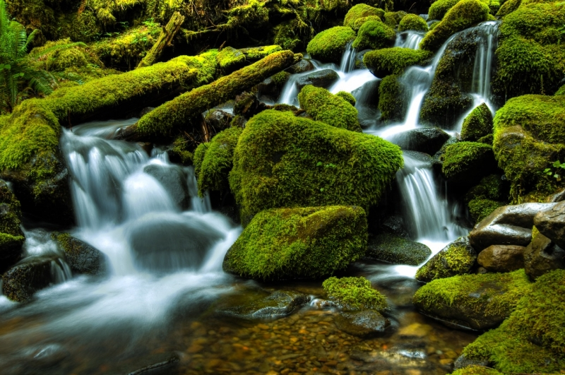 Olympic National Park Stream