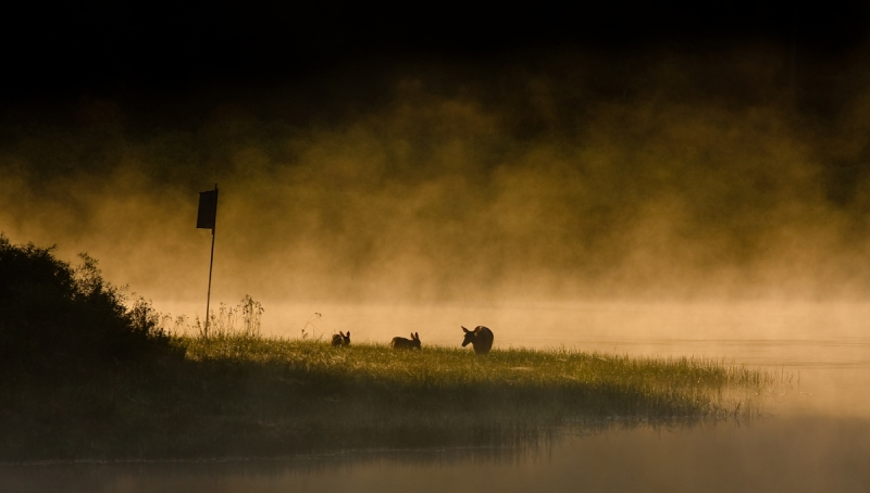 Sunrise At Lake Of The Twin Fawns