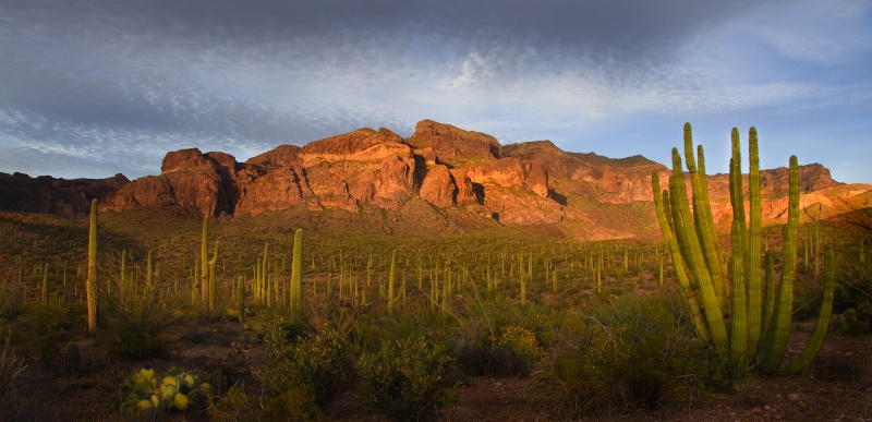 Magic Light In Organ Pipe