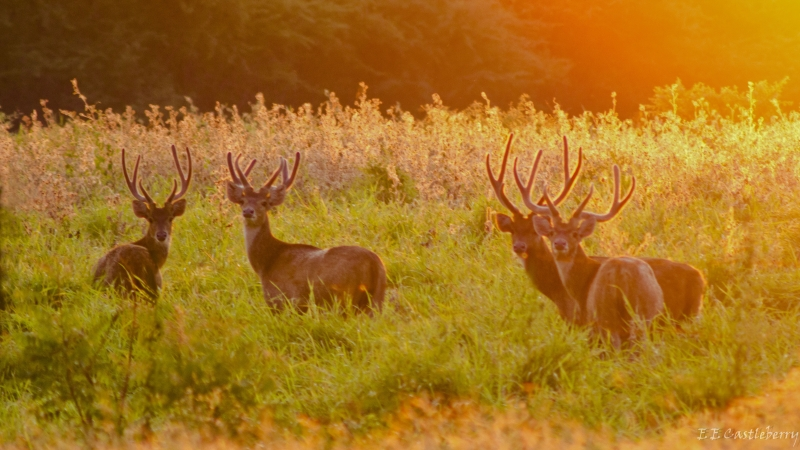 Sunrise Stag Party