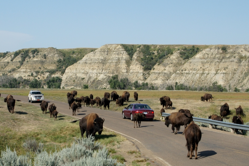 North Dakota Traffic Jam