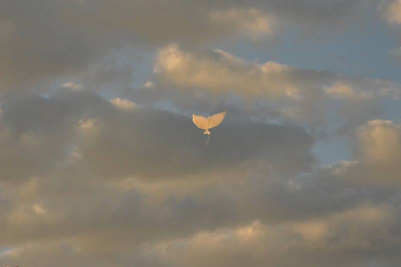 On The Wing Of A Snow White Dove