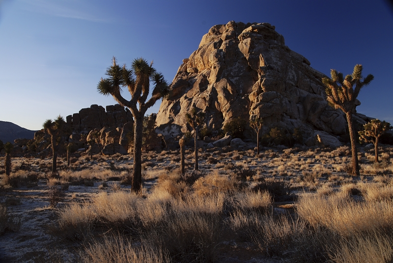 Sunrise Light In Joshua Tree Natl. Park