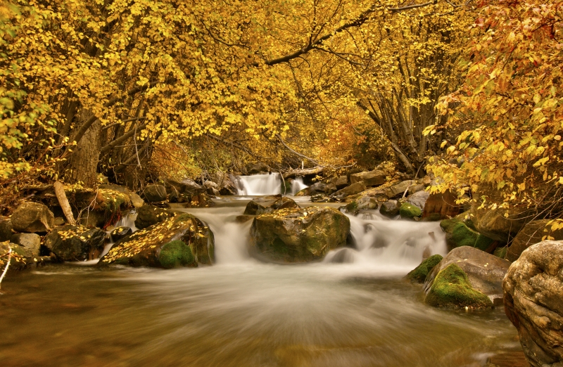 Fall Colors In The Wasatch Mountains