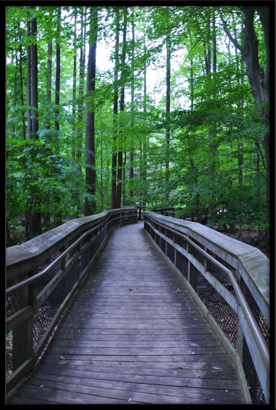 Boardwalk To Cunningham Falls