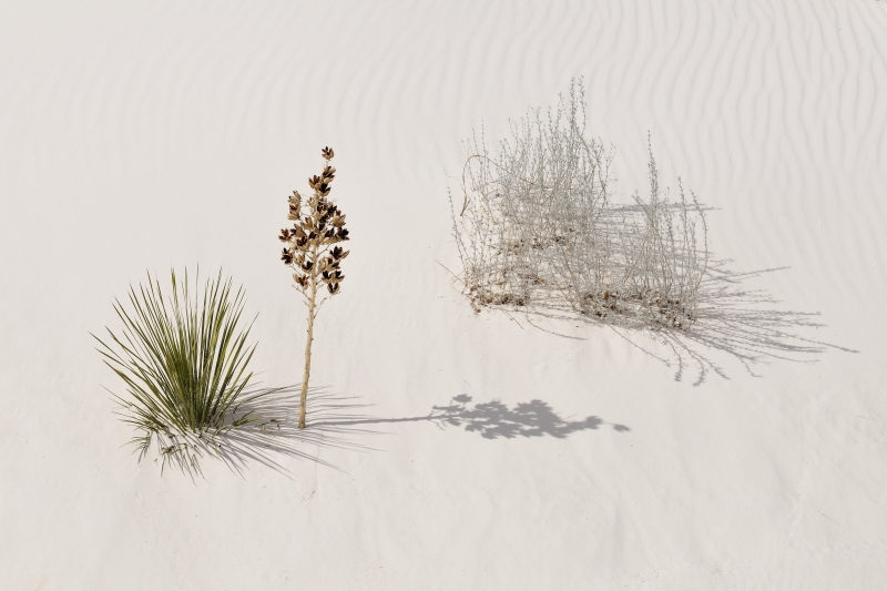 Shadows At White Sands National Monument